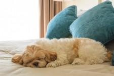 Bästa hotellen i London för hundar