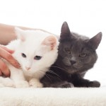 Bilder på katter har ersatt reklamaffischerna i Clapham Commons tunnelbanestation