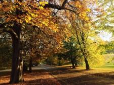Njut av hösten i London