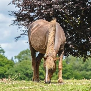 Besök New Forest, se vackra hästar och upplev naturen