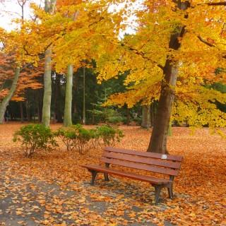 Upplev hösten i London